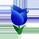 Tulipano blu