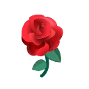 Rosa rossa