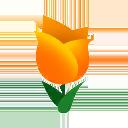 Tulipano corallo