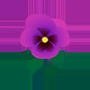 Viola indaco