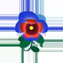 Viola rossoblù