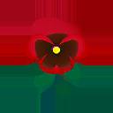 Viola rossa