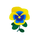 Viola gialloblù