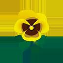 Viola gialla
